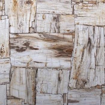 PETRIFIED WOOD IVORY Semi Precious Texture