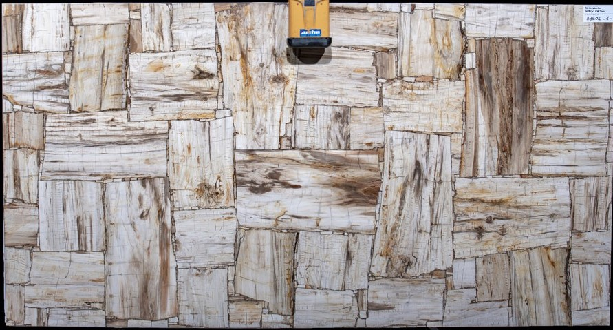 PETRIFIED WOOD IVORY RETRO Overseas Top quality Semiprecious Stone Collection marble in Florida.